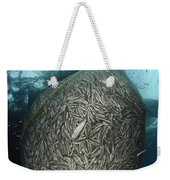 Net Full Of Ikan Puri, A Small Anchovy Weekender Tote Bag
