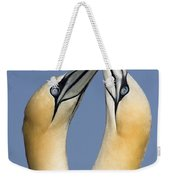 Northern Gannet Morus Bassanus Pair Weekender Tote Bag
