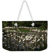Number Of Flamingoes Inside The Jurong Bird Park In Singapore Weekender Tote Bag
