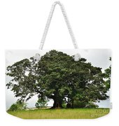 Old Fig Tree - Ficus Carica Weekender Tote Bag by Kaye Menner