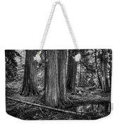 Old Growth Cedar Trees - Montana Weekender Tote Bag