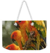 Orange Parakeets Chiang Mai Thailand Weekender Tote Bag