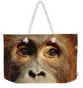Orangutan Eyes Borneo Weekender Tote Bag