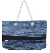 Orca Orcinus Orca Surfacing Showing Weekender Tote Bag by Matthias Breiter