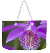 Orchid Pleione Bulbocodioides Flower Weekender Tote Bag