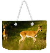 Oribi Two Weekender Tote Bag