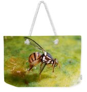 Oriental Fruit Fly Laying Eggs Weekender Tote Bag