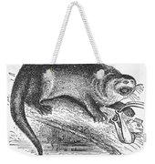 Otter, 1873 Weekender Tote Bag