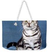 Outstanding American Shorthair Cat Weekender Tote Bag