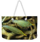 Pair Of Comet Fish, Australia Weekender Tote Bag by Todd Winner