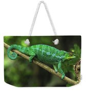 Panther Chameleon Chamaeleo Pardalis Weekender Tote Bag