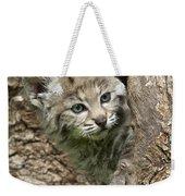 Peeking Out - Bobcat Kitten Weekender Tote Bag