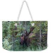 Peeking Through The Spruce Weekender Tote Bag