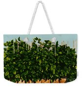 Photoperiodicity In Soybean Plants Weekender Tote Bag