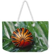 Pill Millipede Glomeris Sp Rolled Weekender Tote Bag by Cyril Ruoso