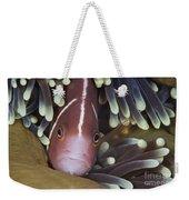 Pink Skunk Clownfish In Its Host Weekender Tote Bag