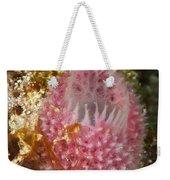 Pink Sponge Weekender Tote Bag