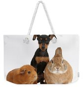 Pinscher Puppy With Rabbit And Guinea Weekender Tote Bag