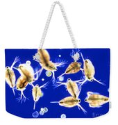 Plankton, Daphnia, And Volvox Weekender Tote Bag by M. I. Walker