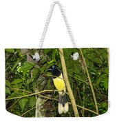 Plush-crested Jay Weekender Tote Bag