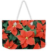 Poinsettia Varieties Weekender Tote Bag