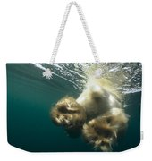 Polar Bear Swiming Away Wager Bay Canada Weekender Tote Bag