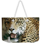 Portrait Of A Captive Jaguar Panthera Weekender Tote Bag