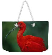 Portrait Of A Captive Scarlet Ibis Weekender Tote Bag