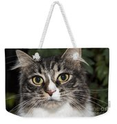Portrait Of A Cat With Two Toned Eyes Weekender Tote Bag