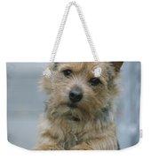 Portrait Of A Norwich Terrier Weekender Tote Bag