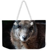 Portrait Of A Wallaby Weekender Tote Bag