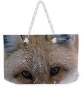 Portrait Of Adult Red Fox Weekender Tote Bag