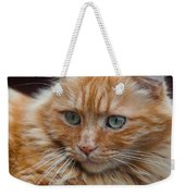 Portrait Of An Orange Kitty Weekender Tote Bag