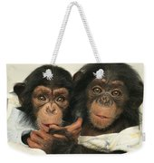 Portrait Of Two Young Laboratory Chimps Weekender Tote Bag