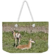 Pronghorn Antelope With Young Weekender Tote Bag