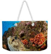 Pufferfish And Reef, La Paz Mexico Weekender Tote Bag