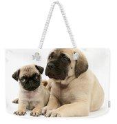 Pug And English Mastiff Puppies Weekender Tote Bag by Jane Burton