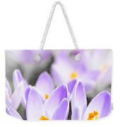Purple Crocus Blossoms Weekender Tote Bag