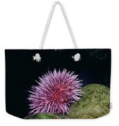 Purple Sea Urchin Feeding California Weekender Tote Bag