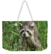 Raccoon Looking For Lunch Weekender Tote Bag