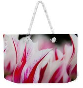 Red And White Tulips In Holland Weekender Tote Bag
