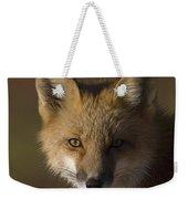 Red Fox Vulpes Vulpes Portrait, Alaska Weekender Tote Bag