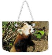 Red Panda Feeding Time Weekender Tote Bag