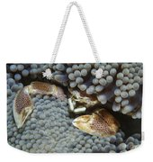 Red-spotted Porcelain Crab Hiding Weekender Tote Bag