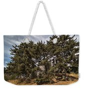Red Spruce On Whitetop Mountain Weekender Tote Bag