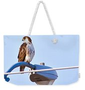 Red-tailed Hawk Perched Weekender Tote Bag