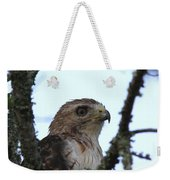 Red-tailed Hawk - Young And The Old Weekender Tote Bag