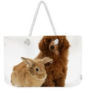 Red Toy Poodle Pup With Lionhead-cross Weekender Tote Bag