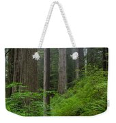 Redwoods Along Ossagon Trail Weekender Tote Bag