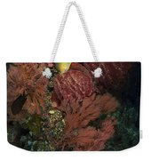 Reef Sponge Coral And Yellow Fish Weekender Tote Bag